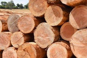 le douglas est il un bois local faut il le traiter entretien du bois le blog du comptoir. Black Bedroom Furniture Sets. Home Design Ideas